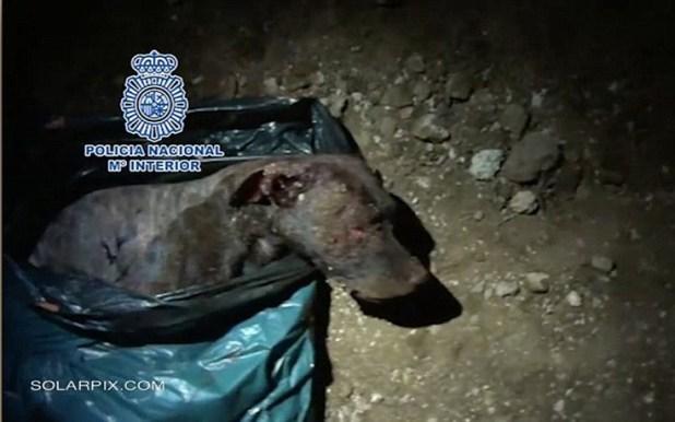 κυνομαχίες κακοποίηση σκύλων