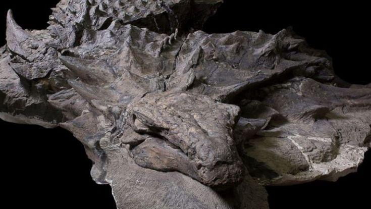 nodosaur1