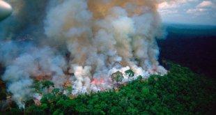 amazon on fire