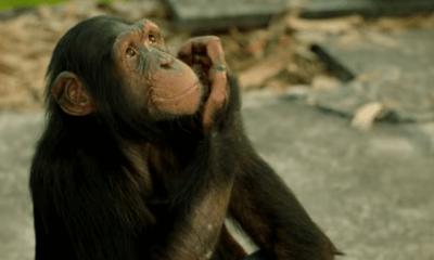 Gorilla Full Movie Download