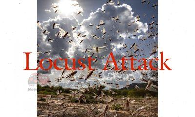 Locust Attack News
