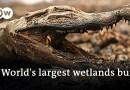 Blazes devastate huge parts of Brazil's Pantanal wetlands | DW News