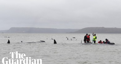 Rescuers work to save whales in worst mass stranding in Australia's history