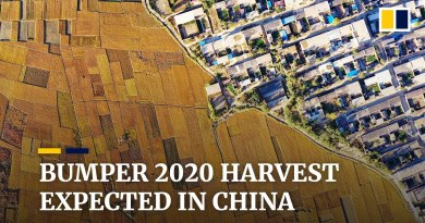 China can expect bumper 2020 harvest despite bad weather and floods, officials say