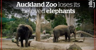 Auckland Zoo loses its beloved elephants | nzherald.co.nz