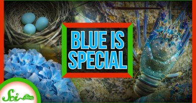 Blue Is Pretty Special: How Nature Gets the Blues