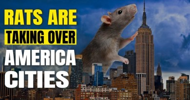 Economy Collapse – Rats Are Taking Over America Cities As A Result Of Lockdowns
