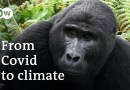 Can Africa's forests help save the world? | DW Documentary