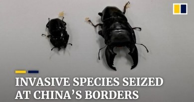 Nearly 4,000 invasive foreign species caught at Chinese borders in 10 months