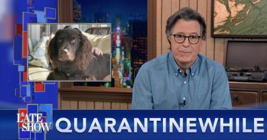 Quarantinewhile… Cats Don't Have Your Back, And Dogs Don't Care If You Live Or Die