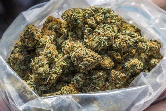 Marijuana buds in a plastic bag
