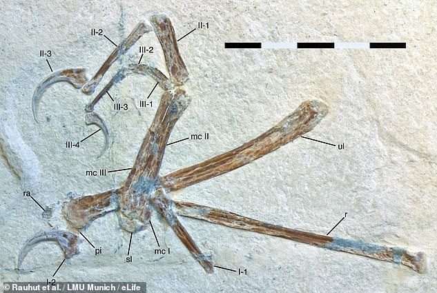 The birds we see today are thought to be the descendants of carnivorous dinosaurs. The oldest-known flying member of this lineage is Archaeopteryx, which bore feathered wings, sharp teeth and a long bony tail