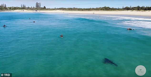 The dark, lurking animal is seen swimming up to the surfers as they wait, legs dangling into the depths below, for a wave - completely unaware of the lurking shark.