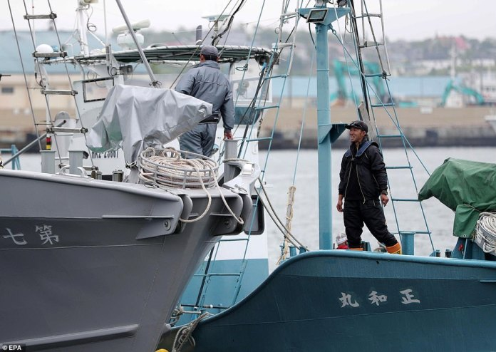 Japanese whaling crews prepare to board their ships and head off into the open ocean on Monday morning in search of rare whales