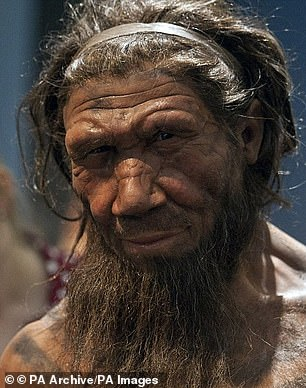 Neanderthals (pictured) were closely related to Denisovans, both of them are now extinct