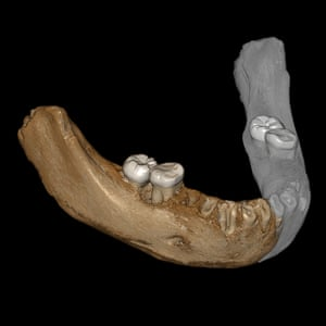 The study follows an earlier discovery that a fossilised lower jawbone found in the Baishiya karst cave on the Tibetan plateau in China, was also from a Denisovan.