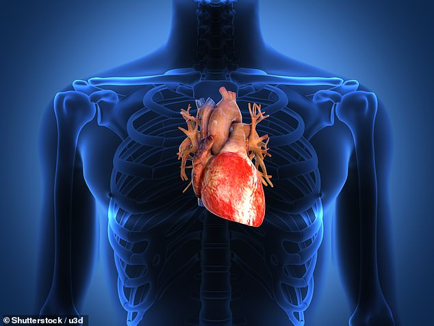 A study found that the heart has evolved over thousands of years in people to become better at endurance tasks, designed to help humans keep on pushing (stock)