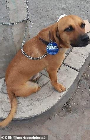Solovino, Raul's loyal dog