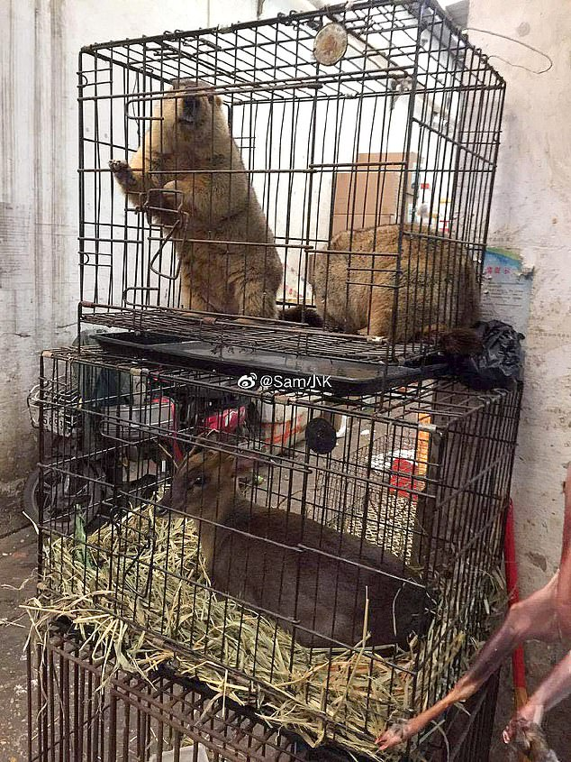 Image shows what appears to be a beaver and a small deer caged at Huanan market