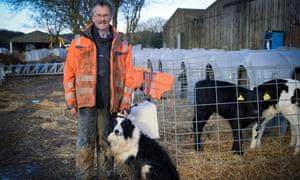 Farmer with livestock and sheepdog