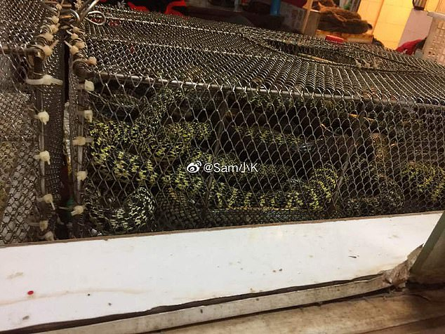 Experts have suggest that the disease may have originated in bats orsnakes, which are known carriers of coronaviruses. The picture shows multiple reptiles at the Huanan Seafood Wholesale Market in Wuhan, which is believed to be the source of the coronavirus outbreak