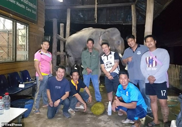Elephant keepers pose with the animal at the Thai enclosure where vets said Boon Peng had become constipated after eating the wrong kind of grass