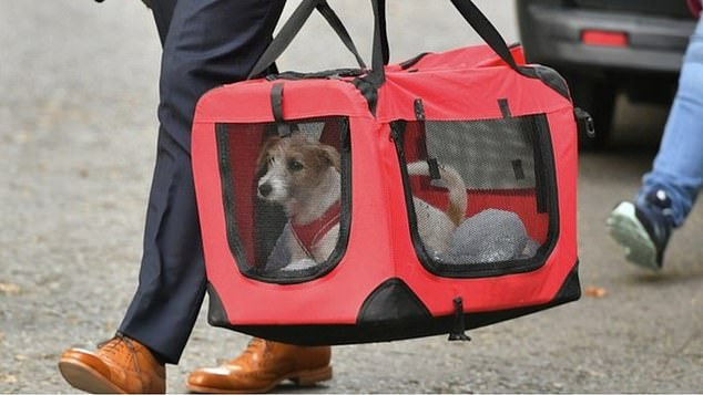 In September 2019, Dilyn was pictured being carried into No.10 for the very first time in a doggy bag