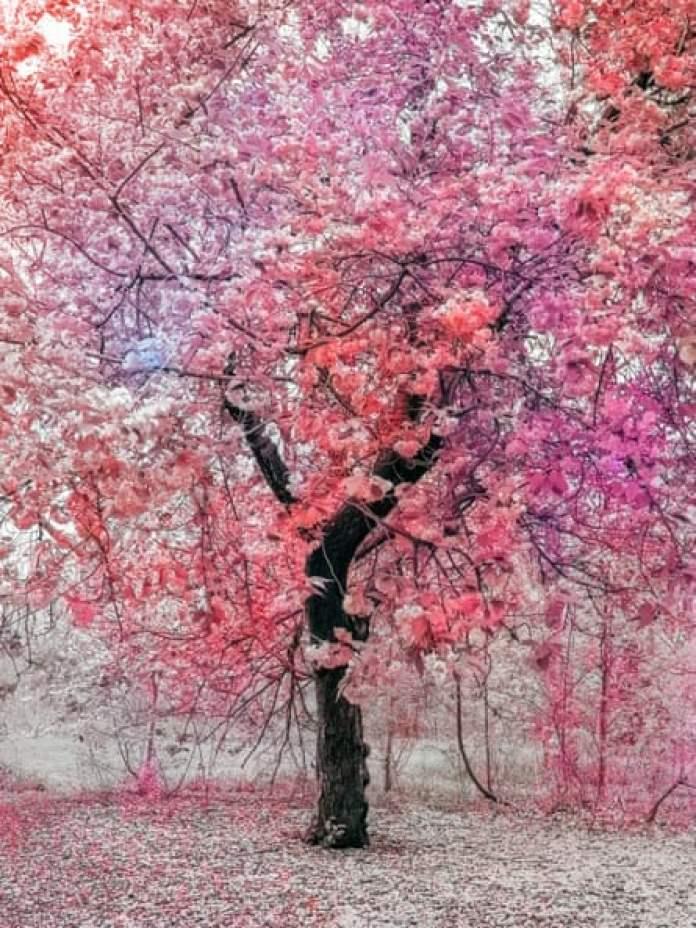Bloom (Pink), 2020.