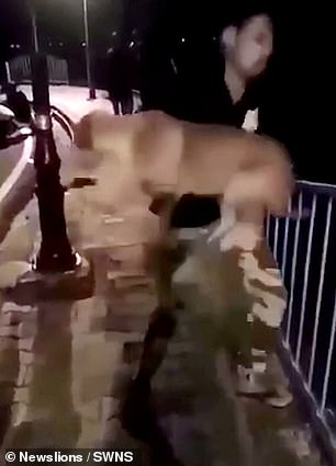 A thug picks up a stray dog and chucks it into a river in India