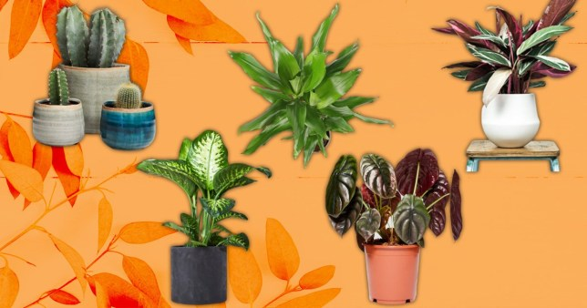 Pictures of different house plants
