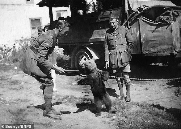 A bear entertains British soldiers in Southern Russia during the country's 1917-1922 civil war