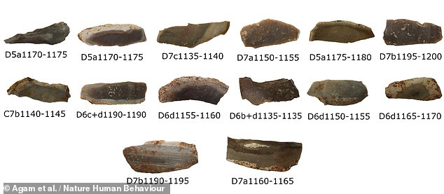 Previous studies identified fire-altered tools from the Late Lower Palaeolithic — 420–200,000 years ago — but it had been unclear if such had been heated intentionally. Pictured, a selection of the flint blades found in theQesem cave