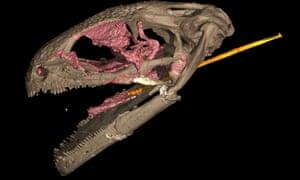 CT scan of an albanerpetontid skull