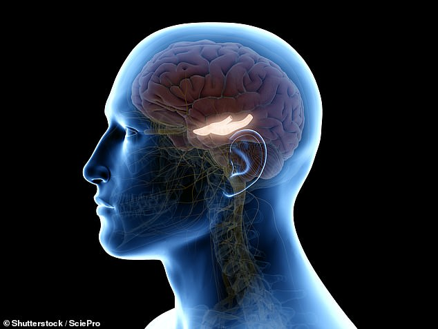 How humans store memories is 'cornerstone of our intelligence'