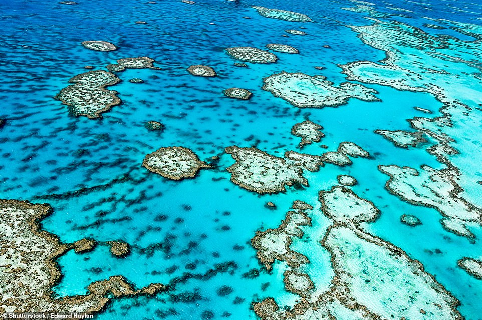 6. GREAT BARRIER REEF, AUSTRALIA: This coral reef system is the largest in the world and is made up of 2,900 individual reefs and 900 islands. Big 7 Travel says: 'In addition to being stunningly beautiful, it's home to an impressive diversity of species'