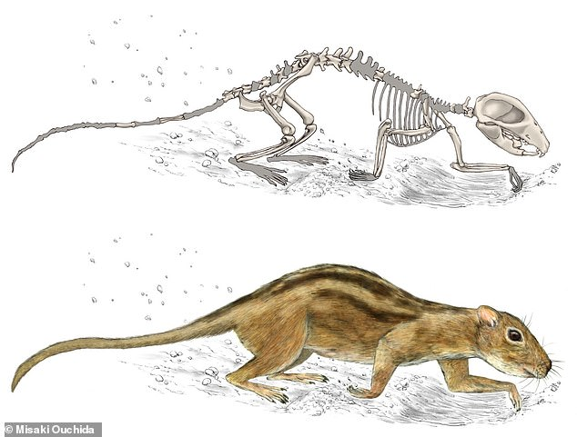 'Multituberculates are one of the most ancient mammal groups, and they've been extinct for 35 million years, yet in the Late Cretaceous they were interacting in groups similar to what you would see in modern-day ground squirrels,' saidLuke Weaver of the University of Washington