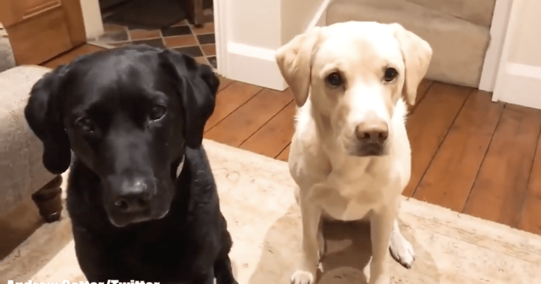 Scots commentator Andrew Cotter's dogs return in hilarious Halloween clip