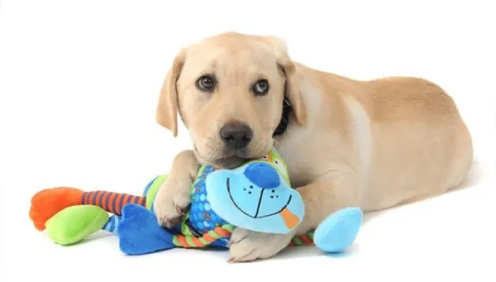 How to buy toys for your pet