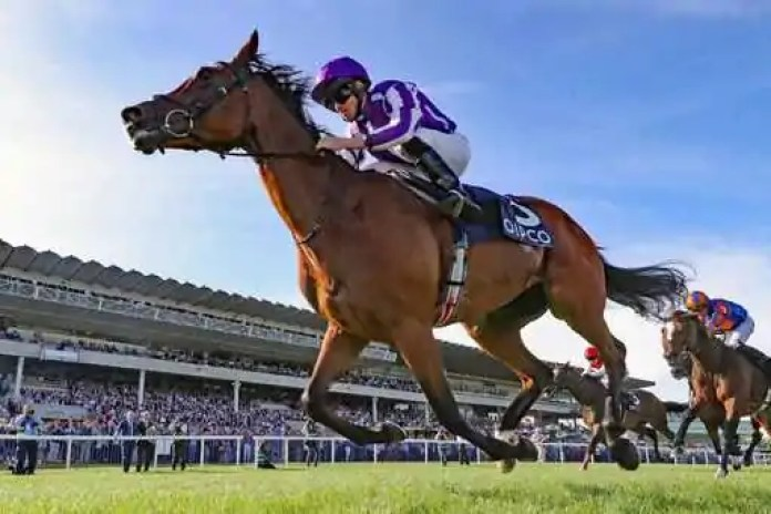 How To's When It Comes To Horse Racing