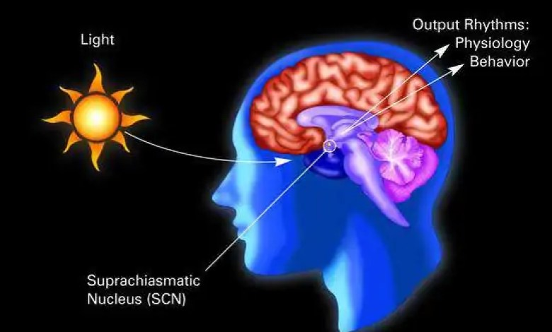 What are biological rhythms controlled by