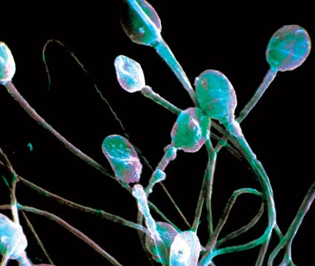 Home News Humans Life  This Week  Semen Controlling Power Over Female Genes