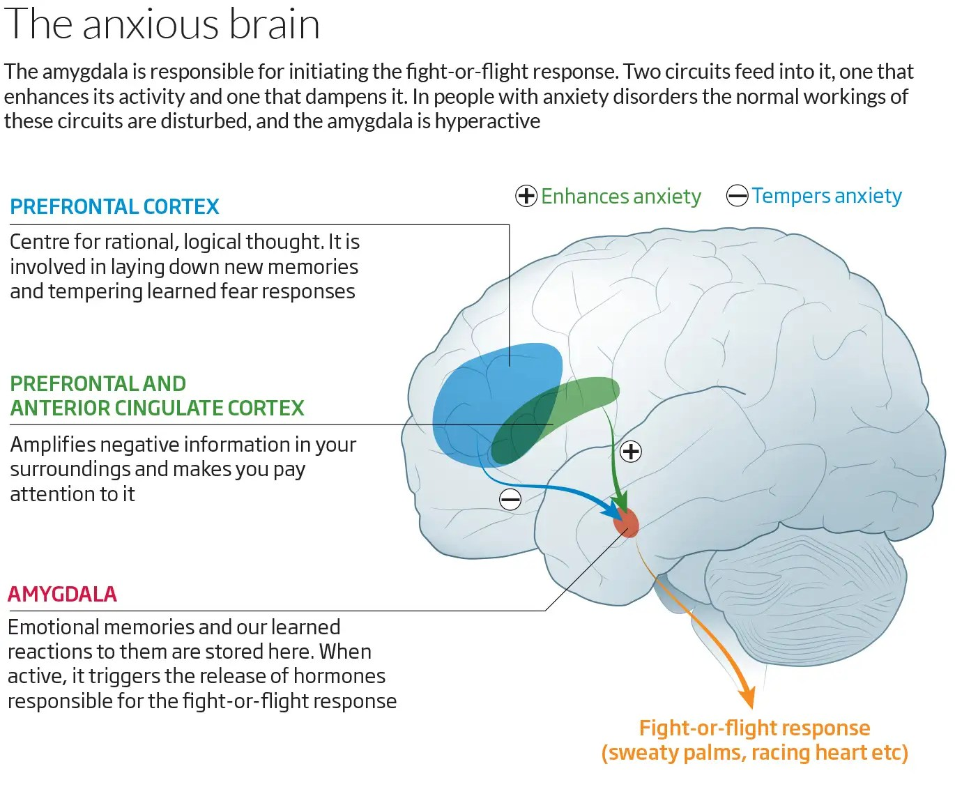 Why We Worry Understanding Anxiety And How To Help It