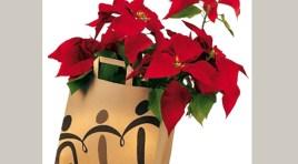 Le stelle di Natale dell'Ail in vendita nel fine settimana tra Montaquila e Roccaravindola