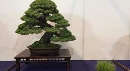Il 25 agosto il Molise Bonsai  presenta una mostra Bonsai nel Giardino della Flora Appenninica di Capracotta.
