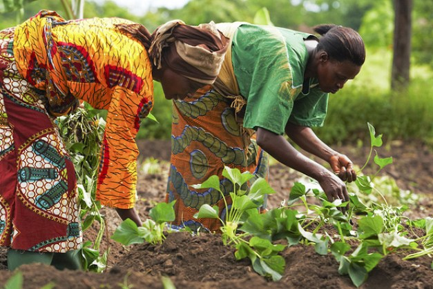 Green Solutions for Africa's Urban Food Security