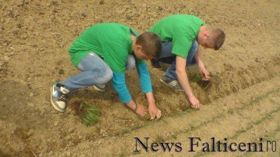 Falticeni-Eco Desire plantat 4