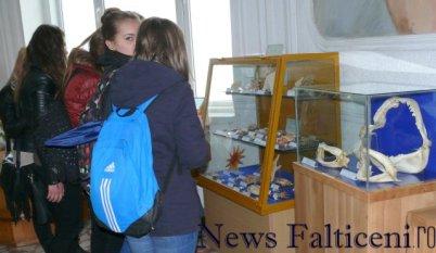 Falticeni-expo 11