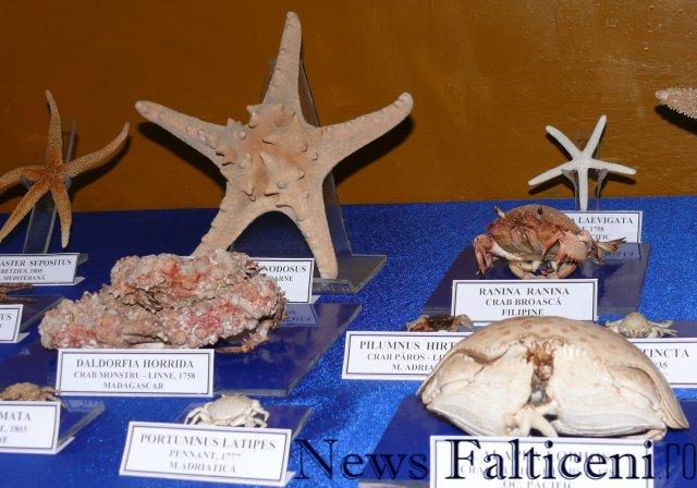 Falticeni-expo 5