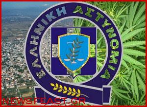 ptolemaida-greek-police-arrest-cannabis