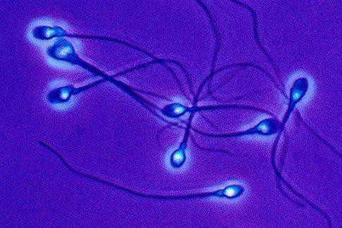 DNA-RNA heredity